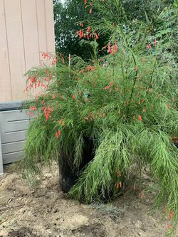 Plant for Sale in Lake Wales,  FL