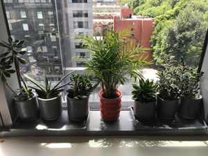 Porcelain wheel thrown grey ceramic succulent planters with drip trays for Sale in Portland, OR