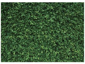 7x5FT Green Leaves Photography Backdrops Mmicrofiber Nature Backdrop Birthday Background for Birthday Party Seamless Photo Booth Prop Backdrop for Sale in Paramount, CA
