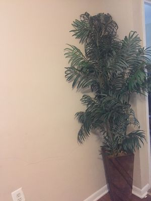 Artificial tree or plant home decor for Sale in NO POTOMAC, MD