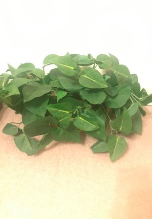 House Plant for Sale in Gilbert, AZ