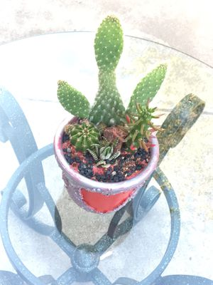 Small Rustic centerpiece with Cactus vase Zebra plant for Sale in Fontana, CA