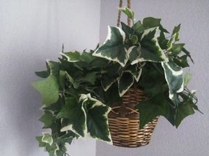Hanging artificial plant for Sale in Tampa, FL