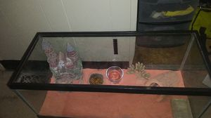 Leapord gecko for Sale in Pawtucket, RI