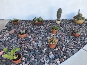 Garden of different cactus cacti Agave and succulent plants for Sale in Tempe, AZ