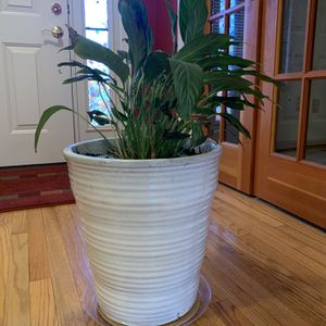 Planter w/plant for Sale in Burtonsville, MD