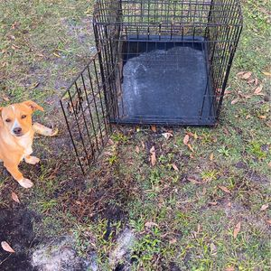 Dog Cage for Sale in Bowling Green, FL