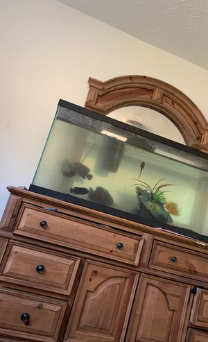Selling huge oscar fish inbox for price for Sale in Lithonia, GA