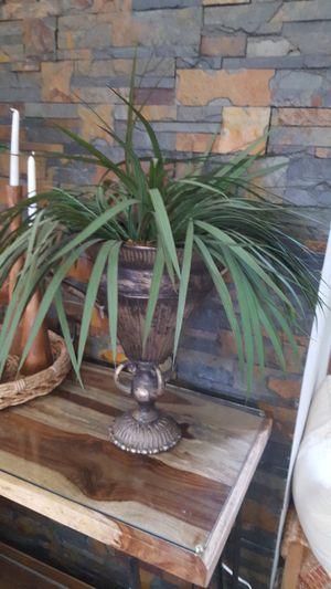 Fern in vase for Sale in Miami, FL