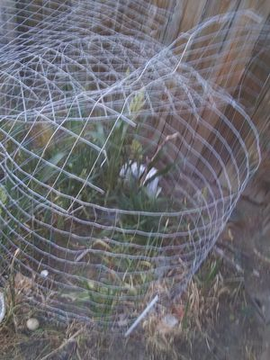 FREE. Wire for chicken pen or whatever for Sale in Colorado Springs, CO