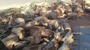 Free eucalyptus firewood for Sale in Glendale, AZ