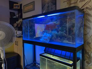 55 gallon Tank & stand & filter & leads for Sale in Brooklyn, NY