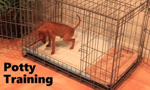 Dog kennel/ Puppy apartment for Sale in Malden, MA