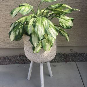 Fake Plant for Sale in Queen Creek, AZ