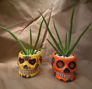 Two rooted aloe vera plants in decorative pots for Sale in San Diego, CA