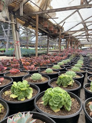 HUGE VARIETY OF SUCCULENTS (add some life to your quarantine!) for Sale in Los Angeles, CA
