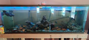 200gallon fish tank for Sale in Stockton, CA