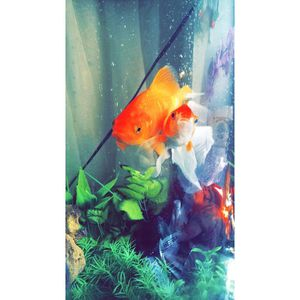 Marineland Half Moon 30gal Fish Tank for Sale in Highland Park, IL