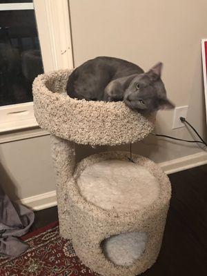 Cat Tree for Sale in Atlanta, GA