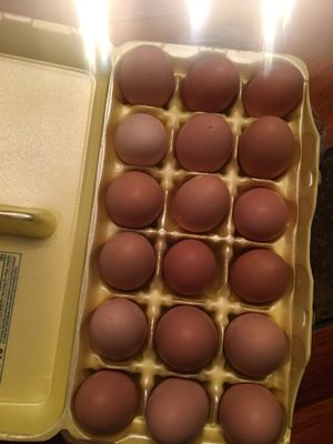 Fresh eggs for Sale in Winchester, KY