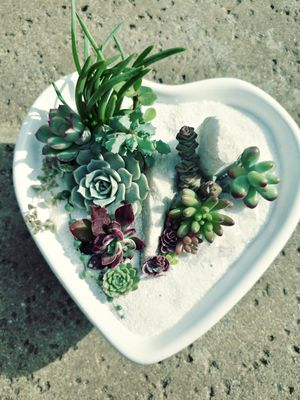 Valentine's Day Arrangement. Succulents in a heart pot for Sale in Industry, CA