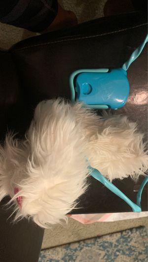 Fluffy go walkies, walking dog for Sale in San Marcos, CA