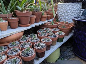 10/19 - Buy a Plant, Buy a Pot - Free Terracotta with Purchase for Sale in Riverside, CA