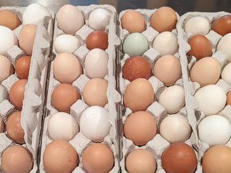 Farm Fresh Eggs for Sale in McDonough,  GA
