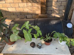 PLANTS for Sale in Cypress, TX