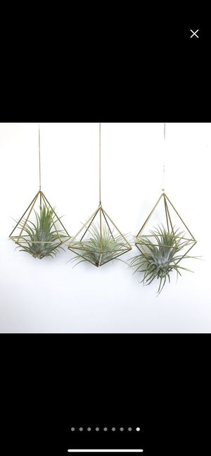 Brass geometric air plant holder for Sale in Los Angeles, CA