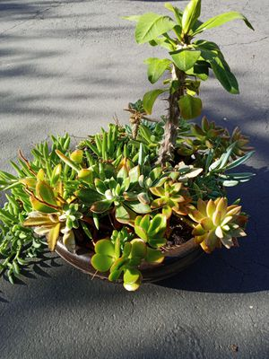 Succulent Arrangement--- Brown clay pot for Sale in Santee, CA