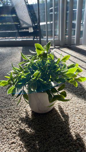 Fake plant for Sale in Walnut Creek, CA