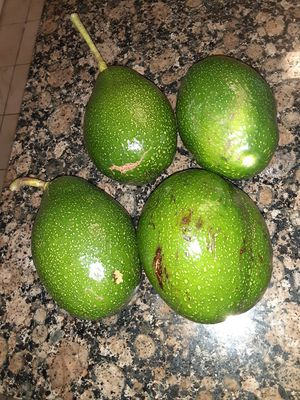 Aguacates (Avocados) for Sale in Alafaya, FL