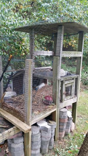 Rabbit Hutch for sale | Only 3 left at -60%