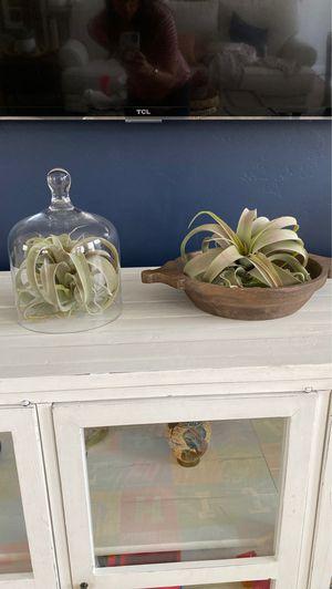 Fake Succulent elegant home decor for Sale in Draper, UT