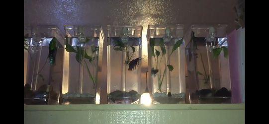 Betta fish tank for Sale in Fresno,  CA