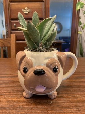 Large Pug Mug with pet-able succulent for Sale in Ponte Vedra Beach, FL