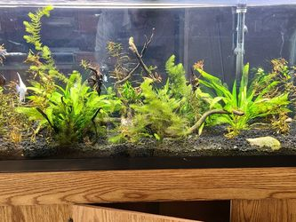 Planted 55 Gallon Aquarium for Sale in Knoxville,  TN