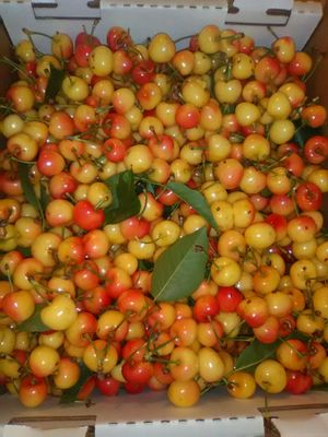 Rainier Cherries Recien Cortada 18 lbs for Sale in Stockton, CA