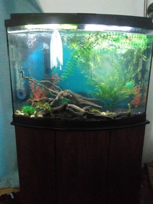 Aquarium 35gal & wooden stand for Sale in Rancho Cucamonga, CA