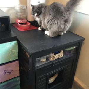 Kitty Litter Box Enclosure for Sale in Los Angeles, CA