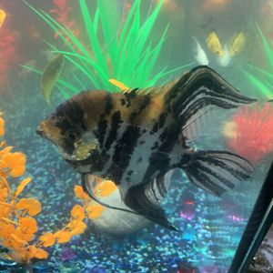 New and Used Fish tanks for Sale in Baltimore, MD - OfferUp