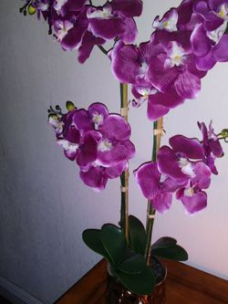 Orchid. for Sale in Boca Raton,  FL