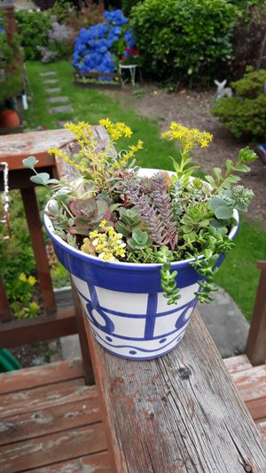 Blue and White Ceramic Garden Pot Full of Succulents Plant Arrangement for Sale in Sumner, WA