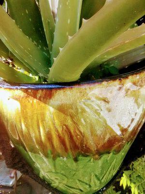 Huge Aloe Vera Macrame for Sale in Kissimmee, FL