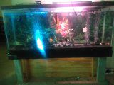 55gallon aquarium already set up wit no leaks good conditions and pump and filter and led light and background for Sale in District Heights, MD