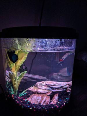 Topfin 3.5 Gallon Fish Tank for Sale in Lexington, KY