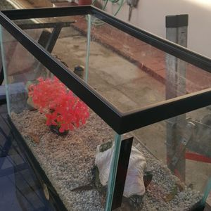 Aquarium All Included for Sale in Tampa, FL