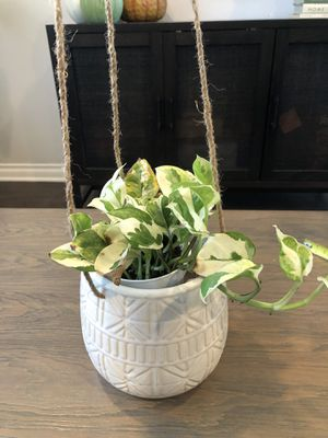 Hanging Planter pot (plant not included) for Sale in Chula Vista, CA