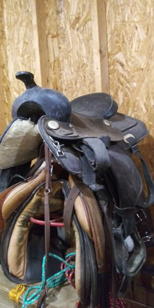 5 different horse saddles $250 obo for Sale in Columbus, OH
